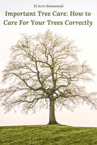 Check out these great tree care tips to keep your homestead trees healthy and productive.