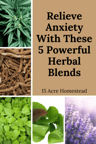 Learn how to use 5 powerful herb blends to relieve anxiety for you and maybe even your family.