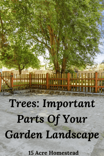 Every homestead should have trees as part of their landscape. Find out how and why right here.