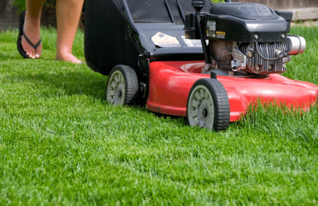 Cutting the grass is important to maintain a beautiful yard