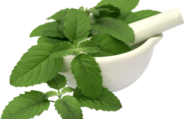 Holy basil being prepared as one of the herbs to calm anxiety