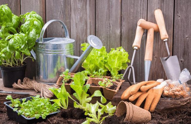 garden plants and tools