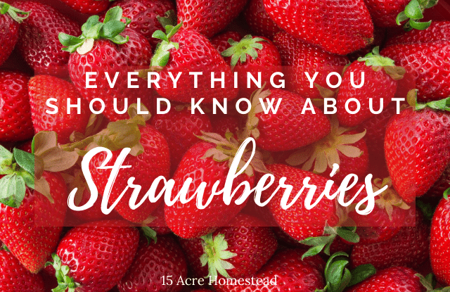 strawberries featured image
