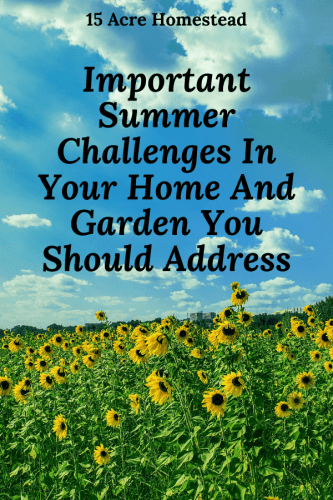 Check out these simple maintenance tips you should be doing in summer on your home.