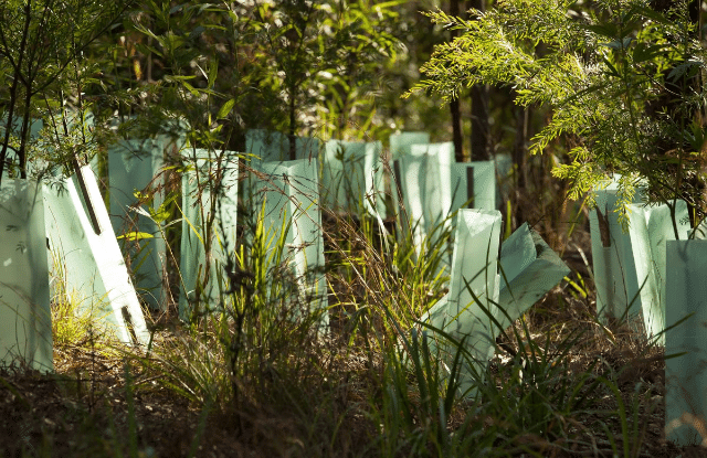 Tree guards being used to protect the tree