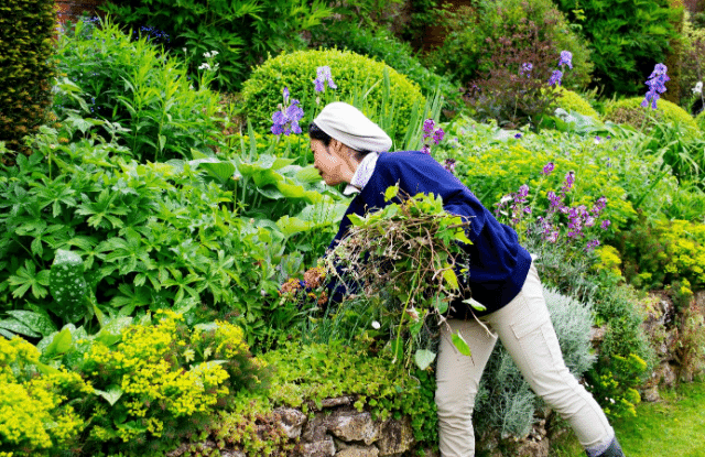 Woman pulling weeds which is one of the common garden issues
