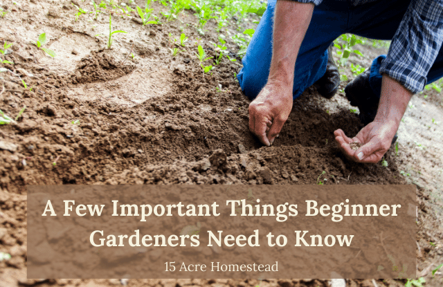 Beginning gardeners featured image