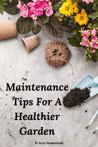 Use these simple ideas to start achieving a healthier garden for you and your family on the homestead right now.