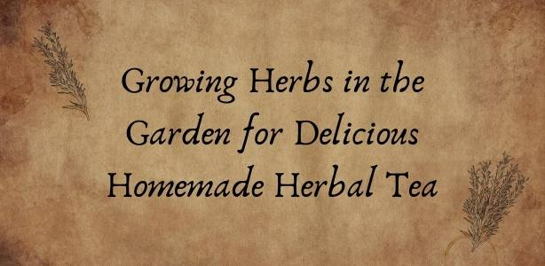 Growing herbs featured image