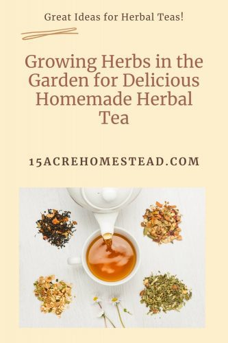 Start growing these wonderful herbs in your herb garden and start brewing some great herbal teas.