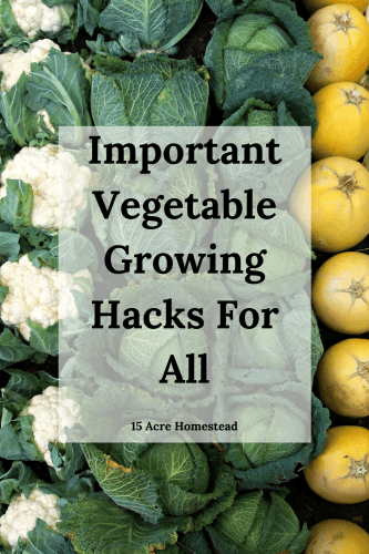 Try these simple tips and hacks for growing your vegetables this year.