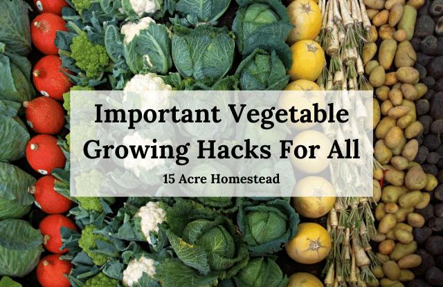 vegetable growing hacks