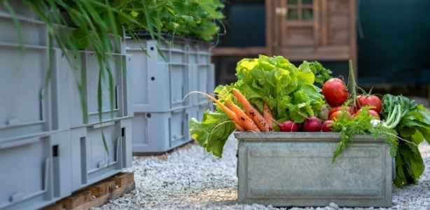 Vegetables in a crate on a sustainable farm
