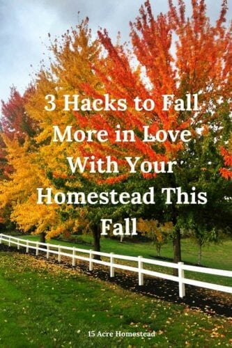 These are some great tips and suggestions to help you fall more in love with your homestead this Fall.