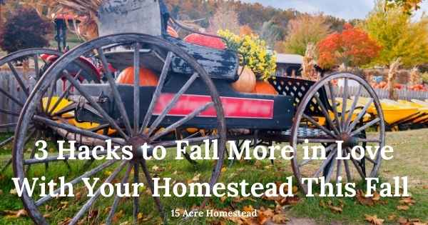 Fall more in love with your homestead featured image