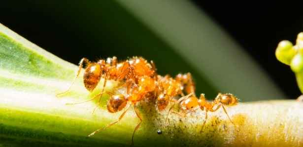Ants on a plant stem