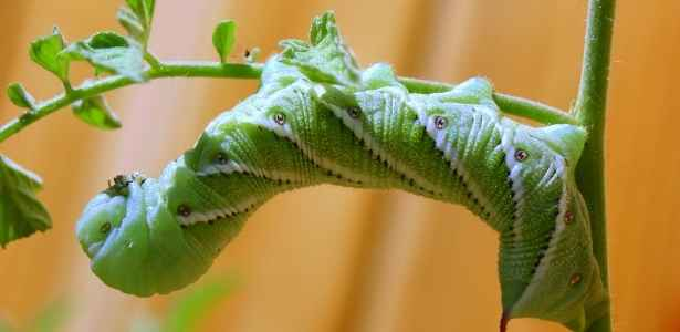 Caterpillar on the stem of a plant in the garden