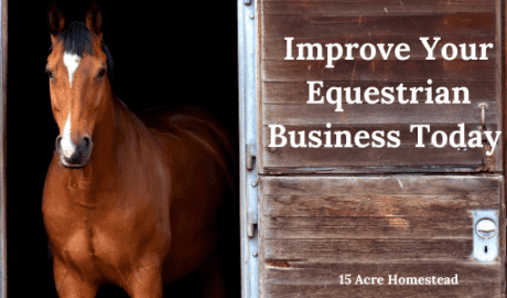 equestrian business featured image