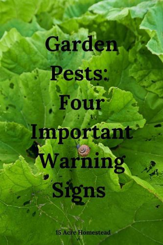 Garden pests can reak havoc on your gardens. Use these simple and easy tips and suggestions to rid your homestead once and for all.