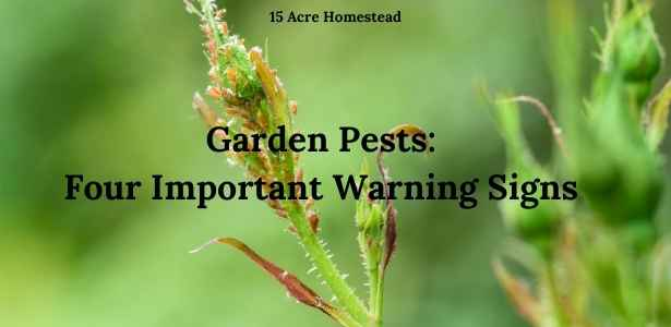 garden pests featured image