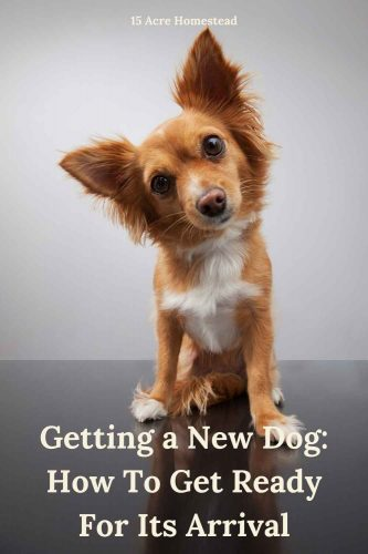 Getting a new dog? Read these tips and tricks to be better prepared before it arrives at your home.