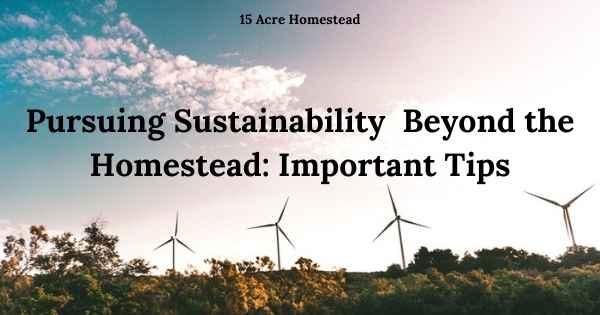 sustainability featured image