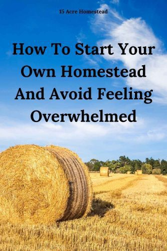 Learn how to start your own homestead and avoid being overwhelmed in the process with some important tips.