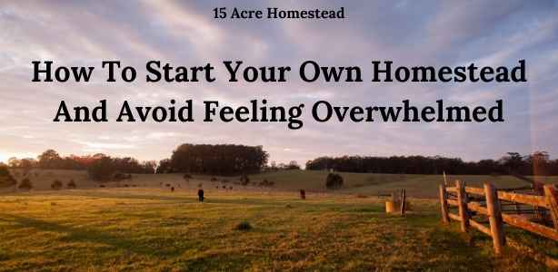 Start your own homestead featured image