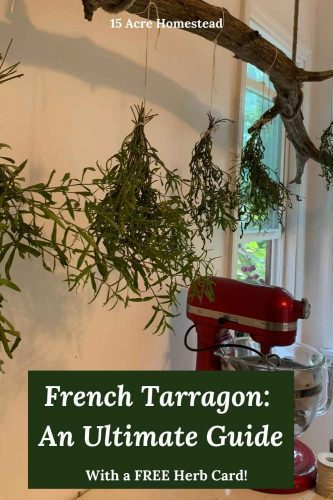 Learn all there is to know to grow, harvest, preserve, and use French Tarragon and download a free herb card to print for your reference too.
