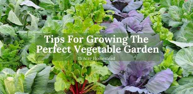 Growing the perfect vegetable garden featured image