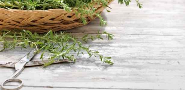 cut pieces of herb