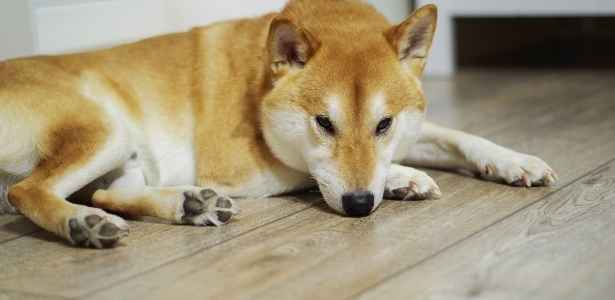 Dog laying on the floor