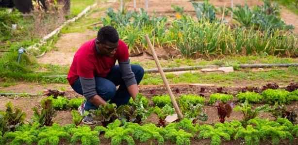 Man working in a vegetable garden