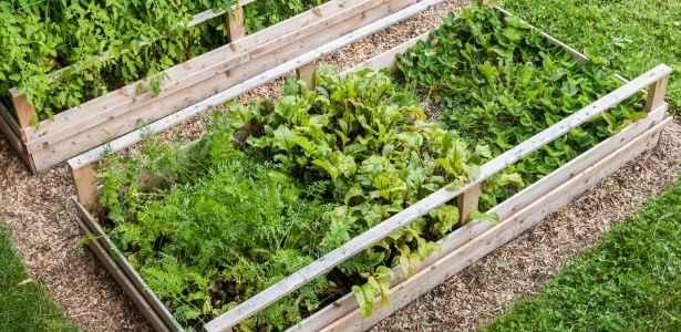Mulch in vegetable garden