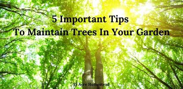 Maintain trees featured image