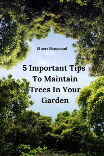 Whether your trees are new or mature, know how to maintain trees isn't always a simple task. To help you to keep your trees healthy and well maintained, try taking onboard the following ideas.
