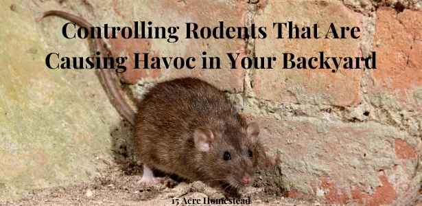 controlling rodents featured image