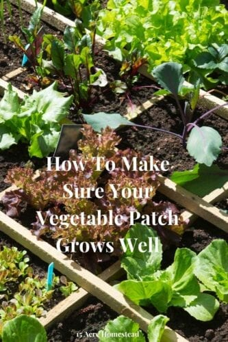 Use these quick tips to have a successful vegetable patch.