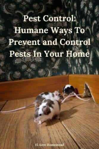 Find some great pest control measures that are safe to rid your home of rodents, insects, and more.
