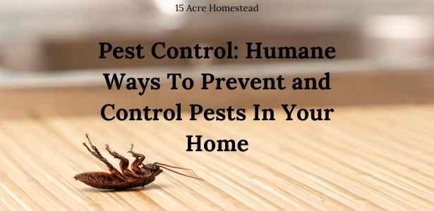 Pest Control featured image