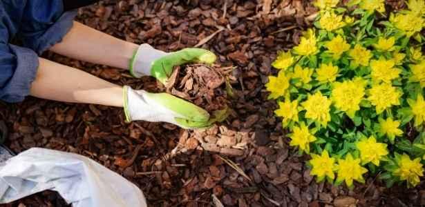 Putting mulch in the garden