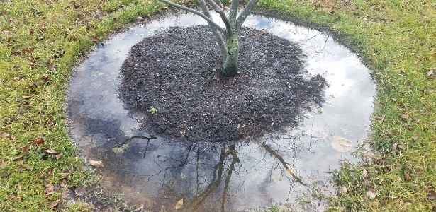 mulched tree after flooding