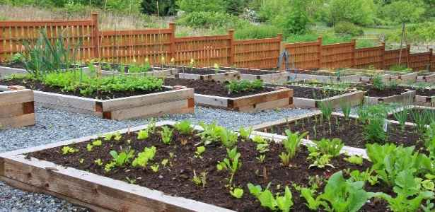 A vegetable patch