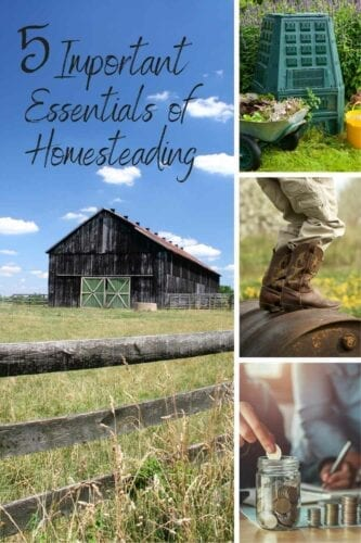 Homesteading is a lifestyle you can really enjoy and prosper from. However, having the essentials of homesteading in place from the beginning can be a huge help and make for a better, less stressful journey.