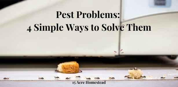 pest problems featured image