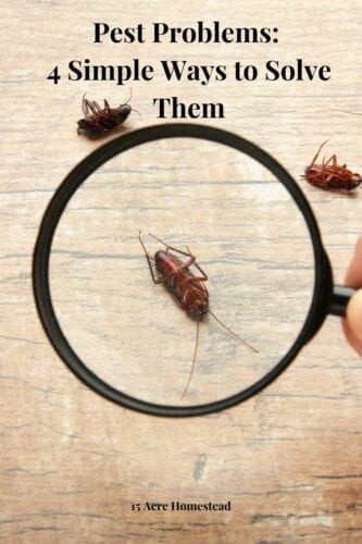 If you are looking for some simple ways of ridding your home from pest problems, these 4 simple tips should do the trick.