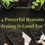 gardening is good for you featured image