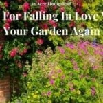 falling in love with your garden featured image