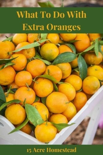 Whether it is a good sale price at the local grocery store or you are forced to harvest your orange trees you don't have to worry about what to do with those extra oranges anymore!