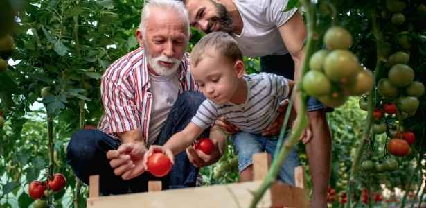 Family picking tomatoes on a farm